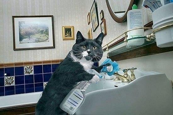 Как заставить кота мыть посуду (2)