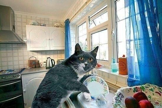 Как заставить кота мыть посуду (7)