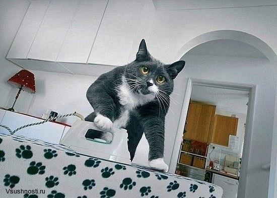 Как заставить кота мыть посуду (8)