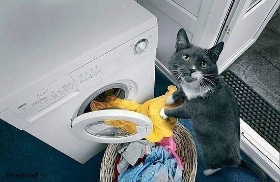Как заставить кота мыть посуду (9)